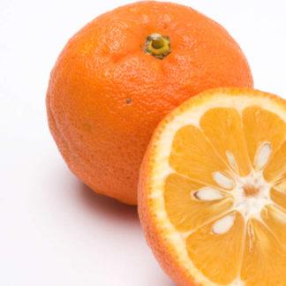 Appelsiner bitre